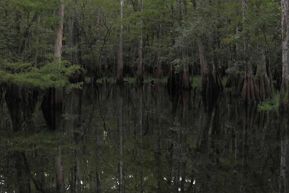 Plants to Watch for on Your Orlando Airboat Tour