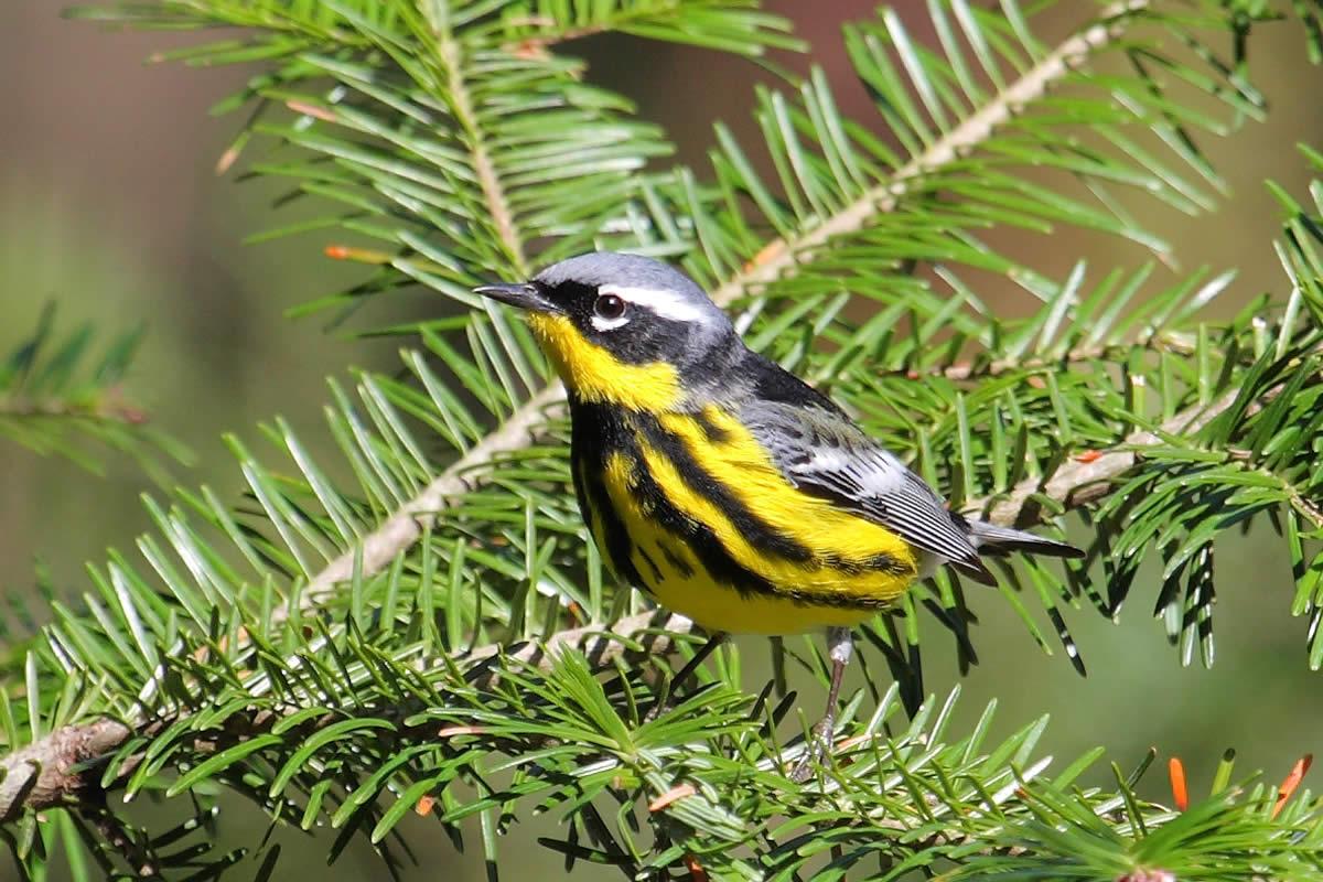 Two Rare Bird Species Sighted Near Orlando