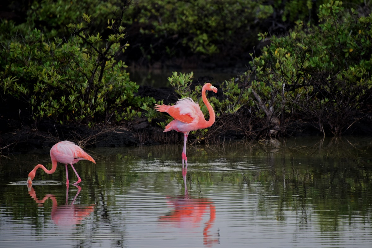 Five Facts about the Florida Swamps