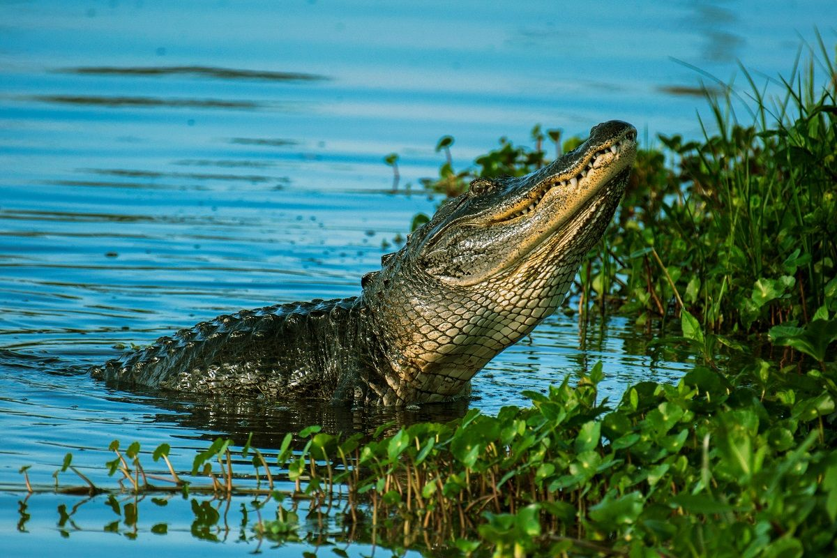Five Fun Facts about the Florida Everglades
