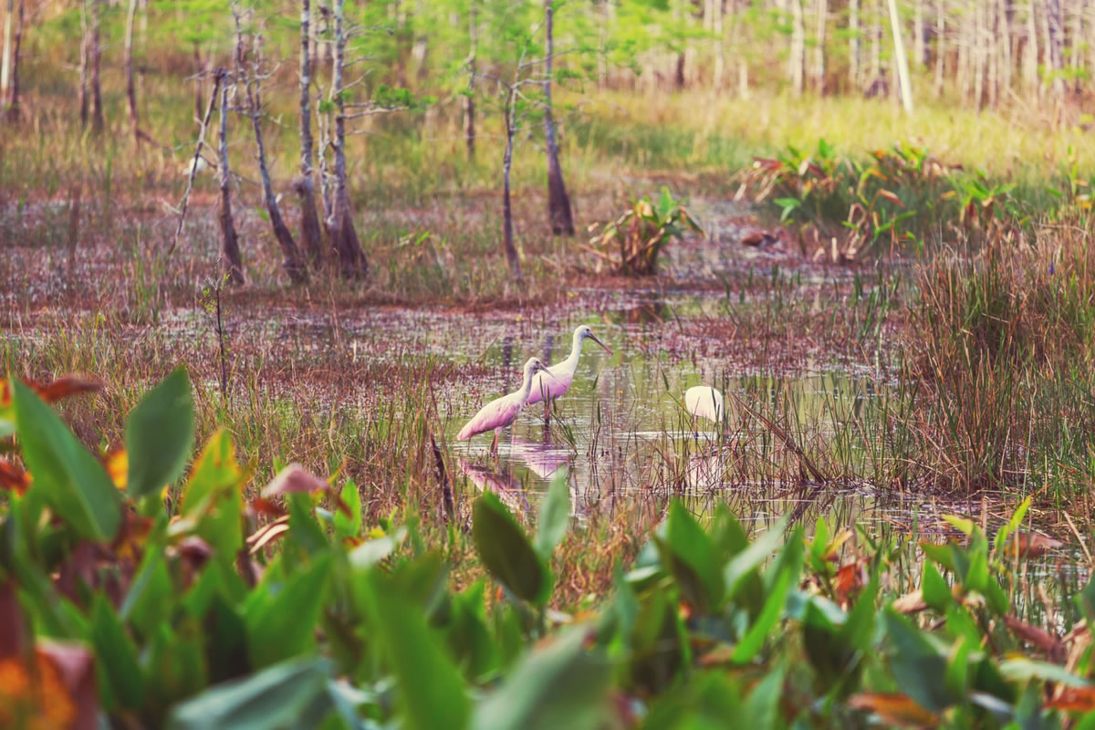 Four Great Reasons to Visit the Florida Everglades National Park